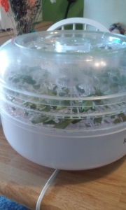 Dehydrator, not the most expensive but it works